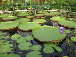 Water Lily House