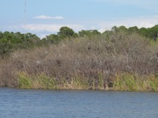 An island in the middle of the lake. Those trees are full of birds.